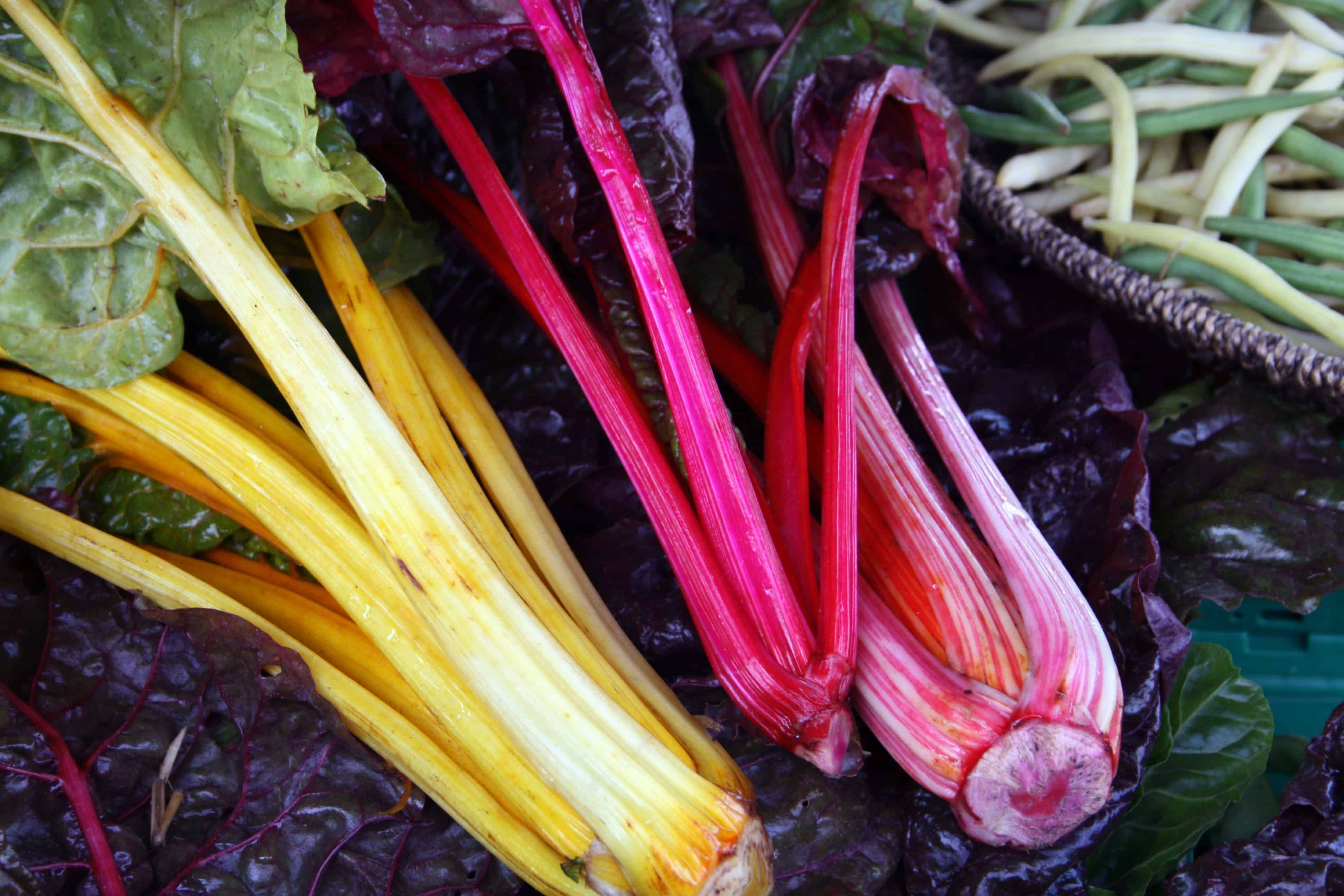 Colorful Rhubarb