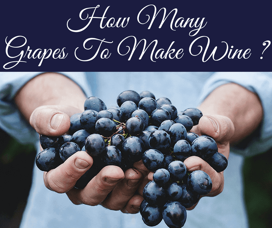 How Many Grapes To Make Wine