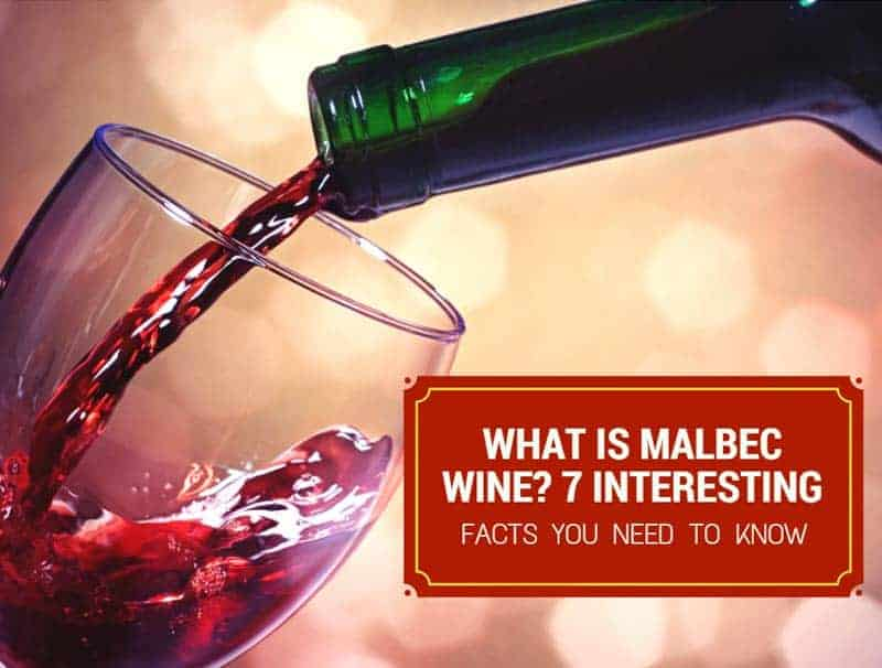 What Is Malbec Wine? 7 Interesting Facts You Need To Know